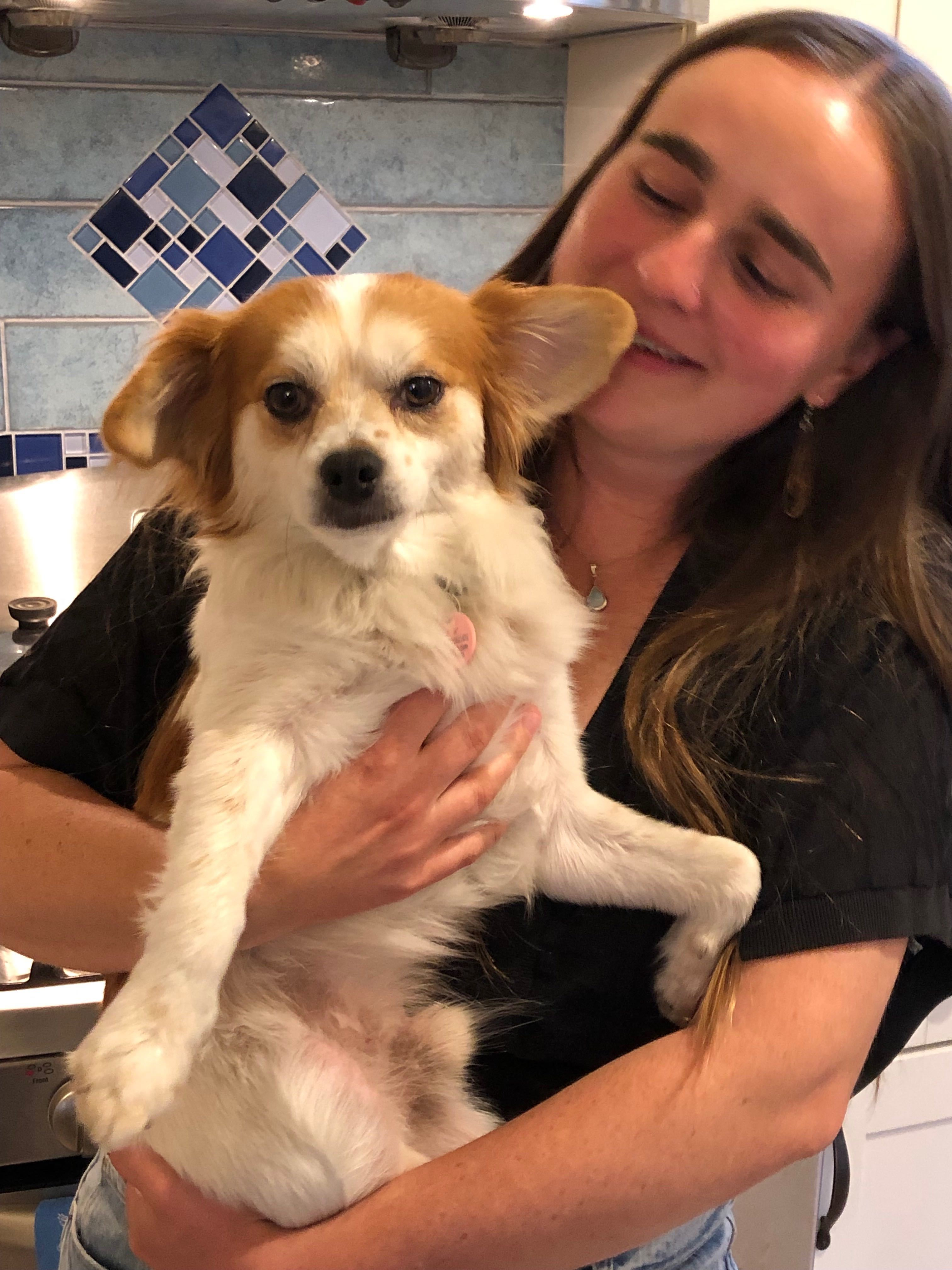 Small Cavalier King Charles and Pomeranian mix dog in the arms of young woman.
